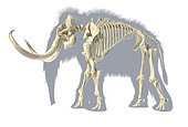 3D illustration of woolly mammoth skeleton with grey silhouette. Side view on white background.