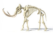 3D illustration of woolly mammoth skeleton, side view on white background with drop shadow.