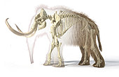 3D illustration of woolly mammoth with skeleton in morph effect. Side view on white background with drop shadow.