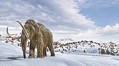 Woolly mammoth in a winter scene environment.