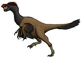 Citipati, a Mongolian oviraptorid from the Cretaceous Period.