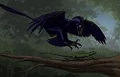 Microraptor hunting a small lizard on a tree branch.