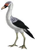 Presbyornis, an extinct genus of anseriform bird, also known as the flamingo-duck.