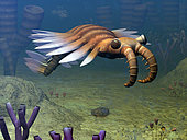 An Anomalocaris explores a Middle Cambrian ocean floor about 500 million years ago. Growing to over three feet long, Anomalocaris is believed to have been a predator whose diet included trilobites. Anomalocaris may have also been one of the earliest arthropods. . . This image includes an Olenoides serratus trilobite and sponges genus Vauxia and Wapkia. The small, flower-like animals (yes, like the sponges they are rooted animals) are from the genus Dinomischus. Above and behind the Anomalocaris is an ancient jellyfish.