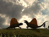 Dimetrodon fight over territory in a scene that must have been repeated many times 280 million years ago. Their spectacular sails are backlit revealing the translucent skin supported by long neural spines, each one sprouting from an individual vertebra. These dimetrodons are each about 11 feet long.