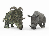An adult Albertaceratops from 77 million years ago is compared to a modern adult White Rhinoceros (Ceratotherium simum). The Albertaceratops is 6 and a half feet tall at the shoulder (weight unknown), while the White Rhinoceros is 6 feet tall at the shoulder and weighs 7,000 pounds.