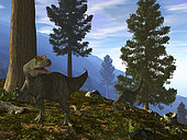 A pair of Allosaurus search for dinner in the pre-twilight of a lush mountainside forest. The orange horns on the foreground Allosaurus identifies this as an adult male, while his female companion behind attempts to make a meal of an unfortunate terrapin. . 150 million years ago during the late Jurassic period, giant Sequoias, also known as Redwoods, may have populated all of the northern continents. These evergreens grow as tall as 370 feet and some have trunk diameters exceeding 25 feet. The only living Sequoias today, and some are over 2,000 years old, occupy a narrow strip of land along the North American Pacific coast. . Some Allosaurus likely hunted in the shade of Sequoias. For 5 million years Allosaurus was the most common large carnivore in North America. Growing as long as 40 feet and weighing up to two tons, this fierce predator probably had few, if any rivals.