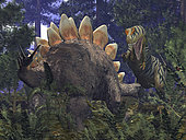 An Allosaurus stumbles upon a grazing Stegosaurus in a Jurassic Redwood forest. While it's probable that the 30 foot, 2 ton Allosaurus preyed upon large herbivores, it is doubtful that one would have risked a direct confrontation with an adult Stegosaurus, which could weigh as much as 5 tons and wields a powerful tail tipped with 3-foot spikes. Adding to its survivability, Stegosaurus' front legs may have been strong enough to allow it to pivot and swing its entire backside around to ward off an assault. . In addition to Redwoods and varieties of fern, this Jurassic-period forest includes the now extinct Pachypteris, an arboreal plant that grew to a height of 10 feet and populated every major continent 160 million years ago (in this image, the Stegosaurus is stepping back onto a Pachypteris, obliging a much smaller lizard to abandon its roost). . Was the Allosaurus really striped like Siberian tigers? Fossilized impressions of dinosaur skins reveal combinations of smooth and bony scales, and even feathers for some, but nothing has been preserved that would tell us what colors may have adorned them. Nevertheless, there are plenty of colorful modern reptiles for us to refer to, and birds, which may be the dinosaurs' closest living descendents, are among the most colorful vertebrates of all. Allosaurus reigned for 10 million years, so there was plenty of opportunity for them to evolve a wide variety of coloring schemes, if required.