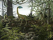 Three carnivorous Coelophysis, one male and two females, walk amongst a forest of prehistoric Araucaria evergreens. Coelophysis is one of the earliest known dinosaurs, emerging about 215 million years ago during the late Triassic period. It stood only as tall as a man's hip and probably was a fast runner.