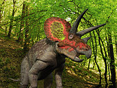 A ten ton Triceratops wanders a Cretaceous forest 68 million years ago in what is today the Western United States.