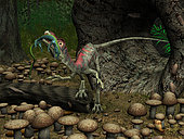 A Compsognathus prepares to swallow a small lizard it has ambushed by hiding in a hollow log. One fossilized example of Compsognathus has an entire lizard in its stomach, suggesting that Compsognathus may have swallowed some of its meals whole. Compsognathus also likely preyed on small insects.