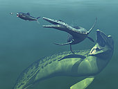 Artist's concept of primary marine predators that shared the ocean waters of the Western Interior Seaway of North America 75 million years ago. Left to right is a non-descript invertebrate pursued by a 4 foot long Enchodus, followed by a 17 foot long Dolichorhynchops, followed by a 55 foot long Mosasaur.