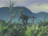 A colorful adult male Dilophosaurus explores a hilltop that is host to Williamsonia gigas, Sago Palms, and ferns. The tree-like Williamsonia gigas was a seed plant belonging to the order of Bennettitales and reigned for 130 million years before becoming extinct. Williamsonia gigas produced what appears to be large flowers, which were really a group of seeds surrounded by a crown of leaf-like structures known as bracteae. True flowers didn't begin to dominate the landscape until relatively recently, about 50 million years ago. The 0ther flora illustrated here live to this day, including the coniferous Araucaria, ferns, and Sago Palms (which in reality are not palms but a type of gymnosperm). . The first known predatory dinosaur appeared 190 million years ago during the early Jurassic period. Christened Dilophosaurus (meaning two-crested lizard, because it had a pair of distinctive bony crests on its head) this bipedal saurischian grew up to 20 feet long, stood 8 feet tall, and weighed as much as a half ton. Dilophosaurus roamed the Earth 100 million years before its larger and more celebrated cousin Tyrannosaurus Rex roared onto the scene.