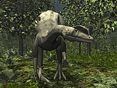 A hungry, carnivorous Dilophosaurus hunts for her next meal in a valley forest of Ginkgos. The Ginkgo first emerged 270 million years ago and it is the oldest species of tree still living today, a living fossil. It has no close living relatives. The Ginkgo is very tolerant of extreme conditions including manmade pollutants, which ironically makes this primeval plant well-suited for today's urban environments.