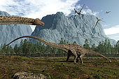 Vegetarian Diplodocus leisurely graze while several pterodactyls pass overhead 150 million years ago in what is today North America. 115 feet long and weighing over 10 tons, from the tip of tail to its diminutive head Diplodocus is the longest known dinosaur.