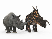 An adult Einiosaurus from 77 million years ago is compared to a modern adult White Rhinoceros (Ceratotherium simum). The Einiosaurus is 6 and a half feet tall at the shoulder and weighs 8,000 pounds, while the White Rhinoceros is 6 feet tall at the shoulder and weighs 7,000 pounds.
