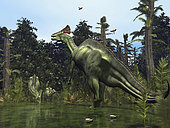 In a scene 75 million years ago from what's now Montana, a six ton male Lambeosaurus rears onto its massive hind legs in response to a possible threat, while a female and juvenile Lambeosaurus drink near the river's edge. Lambeosaurus was a plant-eating dinosaur known for its distinctive hollow cranial crest, which in the best-known species resembled a hatchet. The purpose of the crest is unknown. . Also featured here are Late Cretaceous Period flora including the now extinct tree fern Tempskya and species of flowering Magnolia similar to the Southern Magnolia we know today. Modern birds were just making their appearance, though avian fossils from this period are rare.