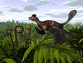 A feathered Microraptor alights atop a tree fern 120 million years ago in what is today Liaoning, China. Microraptor is one of the smallest dinosaurs ever discovered. Microraptor's entire body was covered with feathers including a broad stabilizing tail and elongated feathers for flying on both its arms and legs, leading to its classification as a four-winged dromaeosaur.