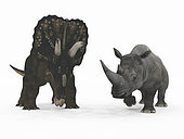 An adult Nedoceratops from 70 million years ago is compared to a modern adult White Rhinoceros (Ceratotherium simum). The Nedoceratops is a little over 8 feet tall at the shoulder and weighs 12,000 pounds, while the White Rhinoceros is 6 feet tall at the shoulder and weighs 7,000 pounds.