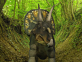 A two ton, 15 foot long Nedoceratops wanders a Cretaceous forest 70 million years ago in what is today Wyoming. Nedoceratops had two prominent horns above its eyes and a single bump above its nose. . . Like the better known Triceratops, Nedoceratops was a Ceratopsid, a family of large four-legged plant-eating dinosaurs characterized by beaks, rows of shearing teeth in the back of the jaw, and elaborate horns and frills. While they resemble defensive shields, the frills are in fact relatively fragile, suggesting that they may have served a purpose other than protecting against a brute force attack. One possibility is that the frills were employed as visual displays in order to intimidate rivals and attract the opposite sex.
