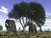 Nedoceratops (formerly known as Diceratops) graze beneath a giant Oak tree 75 million years ago in what is today Wyoming. The ground birds on the right are from the predatory genus Avisaurus.
