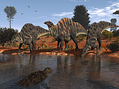 Three Ouranosaurus drink at a watering hole while a menacing Sarcosuchus floats nearby 110 million years ago in what is today Africa. The environment is moderately arid with Prickly Juniper and other hardy conifers dominating the ruddy landscape. . Ouranosaurus was a variety of Iguanodont, a group of large plant-eating dinosaurs. At about 24 feet long and 4 tons, Ouranosaurus was unusual in that its skeleton suggests it had a large hump on its back. The hump may have served as a reservoir for water and/or source of nutrition for lean times as they do for modern bison and camels. . Sarcosuchus, a distant relative of the crocodile, was one of the largest giant crocodile-like reptiles that ever lived. 30-40 feet long and weighing 8 to 10 tons, Sarcosuchus was almost twice as long as the modern saltwater crocodile. It would have been a formidable threat even to a beast as large as the Ouranosaurus.