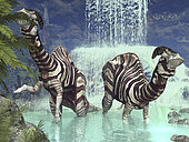 A pair of three-ton plant-eating Parasaurolophus feed on flora near a waterfall 75 million years ago in North America. Similar to plant-eating Lambeosaurus of the same period, these dinosaurs also sported a distinctive hollow cranial crest.