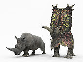 An adult Pentaceratops from 75 million years ago is compared to a modern adult White Rhinoceros (Ceratotherium simum). The Pentaceratops is 8 feet tall at the shoulder and weighs 13,000 pounds, while the White Rhinoceros is 6 feet tall at the shoulder and weighs 7,000 pounds.