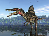 An eight ton Spinosaurus searches for its next meal 95 million years ago in shallow waters of what is today Egypt. With a massive crocodile-like head and enormous muscular body, this terrifying carnivore was larger than the Early Cretaceous Suchomimus and may have been mightier even than the famous Tyrannosaurus Rex of approximately the same period.