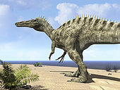 12 feet tall and weighing five tons, a carnivorous Suchomimus wanders a beach on the ancient Tethys Ocean 115 million years ago in search of its next meal in what today is Northern Africa. A ferocious predator nearly as big as T-Rex with a crocodile-like head, Suchomimus may have lived largely on fish and carrion.