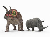 An adult Triceratops from 68 million years ago is compared to a modern adult White Rhinoceros (Ceratotherium simum). The Triceratops is nearly 10 feet tall at the shoulder and weighs 25,000 pounds, while the White Rhinoceros is 6 feet tall at the shoulder and weighs 7,000 pounds.