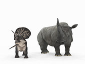 An adult Zuniceratops from 90 million years ago is compared to a modern adult White Rhinoceros (Ceratotherium simum). The Zuniceratops is 3 feet tall at the shoulder and weighs 250 pounds, while the White Rhinoceros is 6 feet tall at the shoulder and weighs 7,000 pounds.