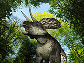 A 10 foot long, 250 pound Zuniceratops wanders a Cretaceous forest 90 million years ago in what is today New Mexico. . . Like the better known and larger Triceratops, Zuniceratops was a Ceratopsid, a family of four-legged plant-eating dinosaurs characterized by beaks, rows of shearing teeth in the back of the jaw, and elaborate horns and frills. While they resemble defensive shields, the frills are in fact relatively fragile, suggesting that they may have served a purpose other than protecting against a brute force attack. One possibility is that the frills were employed as visual displays in order to intimidate rivals and attract the opposite sex.