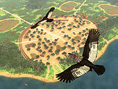 A pair of Andean Condors, male and female, fly over a village in the Amazon basin 1,700 years ago. The Andean Condor is a large vulture whose range includes the Andes mountains and Pacific coasts of western South America. With a wingspan of over 10 feet and weighing up to 30 pounds, it is the largest flying land bird in the Western Hemisphere. Like all vultures, the Andean Condor is a scavenger feeding mainly on carrion.