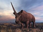 An Elasmotherium grazes on the ancient steppe of what is today Southern Russia. Characterized by a single massive horn (up to 6 feet long), Elasmotherium was a giant herbivorous mammal active in Eurasia about 3 million years ago. Related to modern rhinos, Elasmotherium was more massive, standing about 8 feet tall at the shoulder and up to 26 feet long and weighing over 3 tons. . . Elasmotherium should not be confused with the smaller and extinct woolly rhinoceros which emerged about 2 million years after the appearance of the first Elasmotherium.