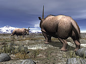 A pair of male Elasmotherium confront one another on the ancient steppe of what is today Southern Russia. Elasmotherium had longer legs than today's smaller modern rhinos, probably enabling it to gallop like a horse.