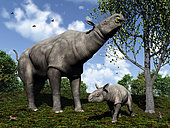 A Paraceratherium mother grazes on leaves and twigs of a poplar tree while her infant son stands nearby in a scene from 30 million years ago during the Rupelian Stage of the Oligocene Epoch in northwest China. Also in this scene on the lower left is a Palaeolagus, an extinct genus of the order lagomorpha, which includes modern hares, rabbits and pikas. On the lower right is a Palaeosciurus, the earliest known ground squirrel. Flying overhead are passerine ancestors of today's perching songbirds. . More massive than a modern African elephant, Paraceratherium is believed to be the largest mammal ever to have walked the Earth. Adult Paraceratherium are estimated to have been 18 ft tall at the shoulder with a maximum raised head height of 26 ft. They may have weighed as much as 20 tons. Related to modern rhinoceroses, Paraceratherium became extinct about 23 million years ago.