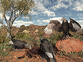 Pleistocene Black Vultures feed on carrion two million years ago in what is today the western United States. Looking on are a pair of Camelops, true camels that resembled the slightly smaller Arabian camels of today. Pleistocene Black Vultures were very similar to today's American Black Vultures with the exception that they were 10-15% larger and had a relatively flatter and wider bill.
