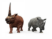 An adult Elasmotherium from 2 million years ago is compared to a modern adult White Rhinoceros (Ceratotherium simum). The Elasmotherium is over 7 feet tall at the shoulder and weighs 8,000 pounds*, while the White Rhinoceros is 6 feet tall at the shoulder and weighs 7,000 pounds. . * Values are estimates only based upon available paleontological data.