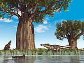 20-foot-long, 1-ton mahajangasuchid crocodyliforms of the genus Kaprosuchus mill about at water's edge near a baobab tree 95 million years ago in what is today Africa. A distant relative of the crocodile, and somewhat larger than modern saltwater crocodiles, Kaprosuchus is notable for boar-like tusks that that project above and below its skull (lending it the nickname BoarCroc). With legs longer than modern crocodiles', Kaprosuchus may have roamed Africa's plains in search of prey which likely included dinosaurs. . Baobabs, trees of the genus Adansonia from the mallow family, are large, drought-resistant trees with very thick trunks (a much as 40 feet in diameter) and growing as tall as 100 feet. The thick trunks can store an enormous amount of water. Baobabs are deciduous, shedding their leaves during the dry season. . The ground foliage is made up of varieties of fern while the reed-like water plants are in fact horsetails.