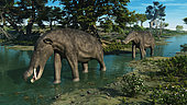 A pair of 3-ton herbivorous proboscidean mammals, a male and female of the genus Platybelodon, follow a shallow stream 9 million years ago in what is today North America. Sharing the scene are stilts (genus Himantopus) foraging for insects and small crustaceans. . Related to modern elephants, Platybelodon were approximately the same size, and in addition to upper tusks they had a pair of flattened shovel tusks on their lower jaw. These lower tusks may have been used to scoop up aquatic and semi-aquatic vegetation and/or scrape edible bark from trees. Platybelodon fossils have been found in North America, Eurasia and Africa. This genus became extinct about 6 million years ago.