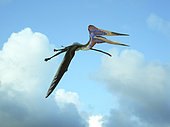 Zhejiangopterus is the genus of a moderately large azhdarchid pterosaur with a wingspan of about 12 feet and weight of about 50 pounds. Known for its long neck and lack of a long protruding head keel typical of other pterosaurs, this flying reptile soared in the skies of Late Cretaceous China about 81 million years ago and likely fed upon fish.