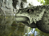 Close-up of the head of a Scutosaurus karpinskii.