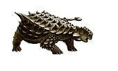 An armored Saichania ankylosaurid, white background.