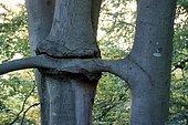 Neighbourhood, proliferation, branch grows in tree, Berlin, Germany, Europe