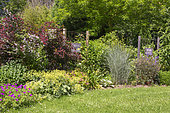 Jardin Cali Canthus, ornamental garden, decorative, visited by the public, plant composition, Saint Maurice (67220), Bas Rhin (67), Alsace, Grand Est Region, France