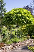 Jardin Cali Canthus, ornamental garden, decorative, visited by the public,various flowers, Saint Maurice (67220), Bas Rhin (67), Alsace, Grand Est Region, France