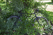 Jardin Cali Canthus, ornamental garden, decorative, visited by the public, old bicycle buried in vegetation, Saint Maurice (67220), Bas Rhin (67), Alsace, Grand Est Region, France