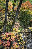 Autumn in the Verdon Regional Nature Park, Alpes de Haute Provence, France