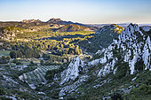 Landscape of the Alpilles Regional Nature Park, In the background, the summit, the Opies, Bouches-du-Rhône, France